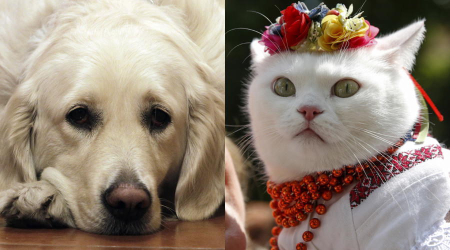 Cat-astrophic dogfight: Felines nearly wiped out all dogs in ancient times, scientists say