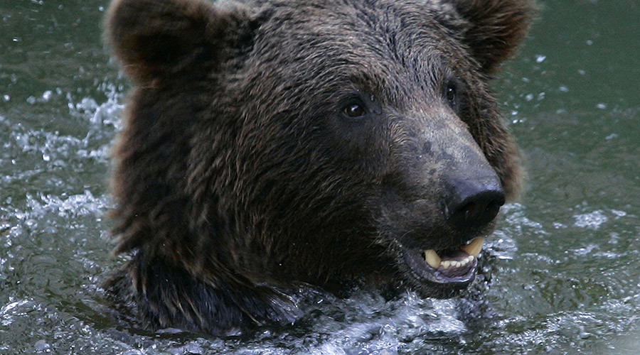 RIP Masyanya bear: Animals die in flooded zoo in Russia's Far East, locals say (PHOTOS, VIDEO)