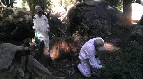 Second Yosemite tourist may have plague, park remains open