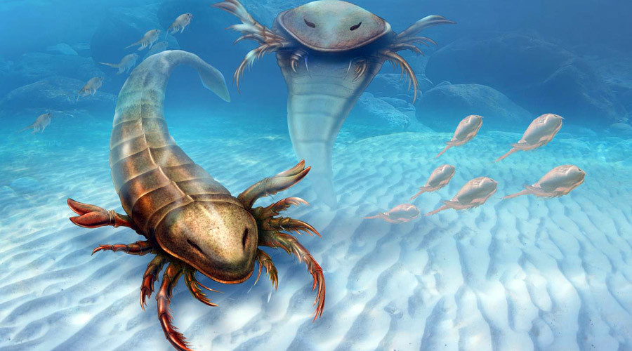 Fossils from 460 million year old human-sized sea scorpion unearthed in Iowa