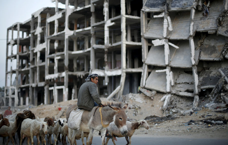 A Palestinian shepherd rides a donkey as he herds livestock past residential buildings, that witnesses said were heavily damaged by Israeli shelling during a 50-day war last summer, in Beit Lahiya town in the northern Gaza Strip. © Suhaib Salem