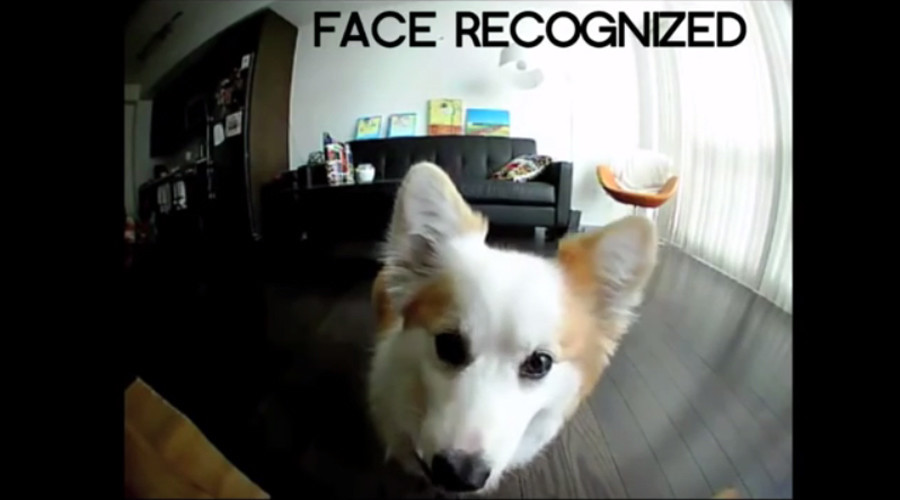 'Petificial Intelligence!' Babysitting device will have your dog taking selfies