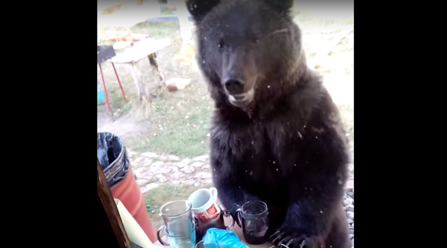Rummaging Russian bear catches mother & toddler by surprise (VIDEO)