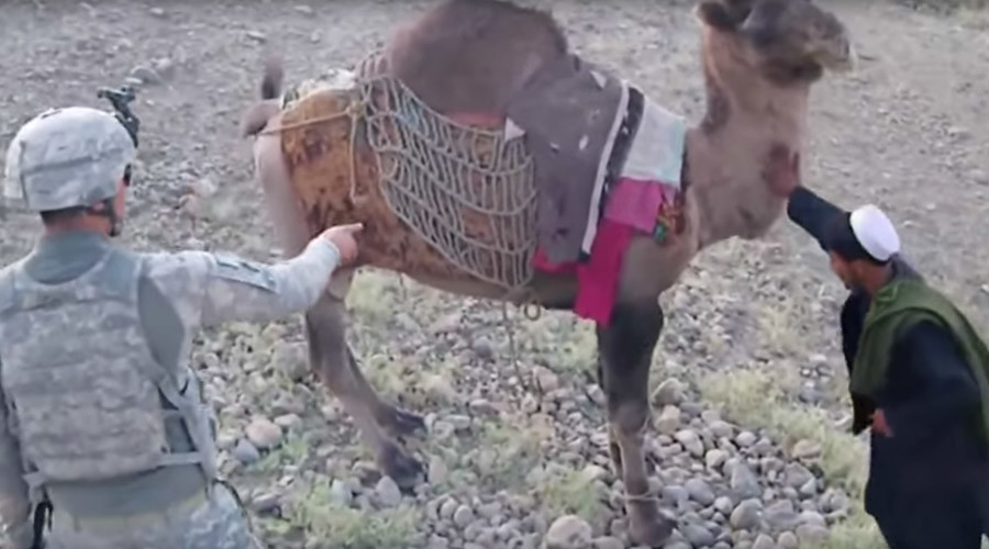 'What goes around, comes around': Camel kicks US soldier in Afghanistan (VIDEO)