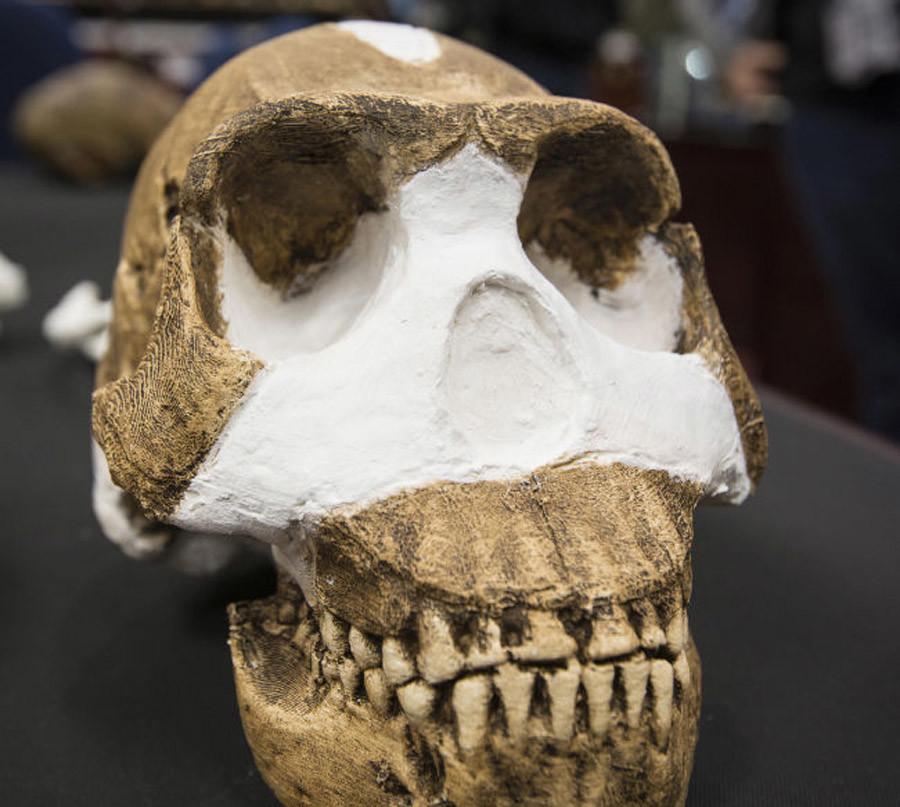 Homo naledi skull. © Wits University