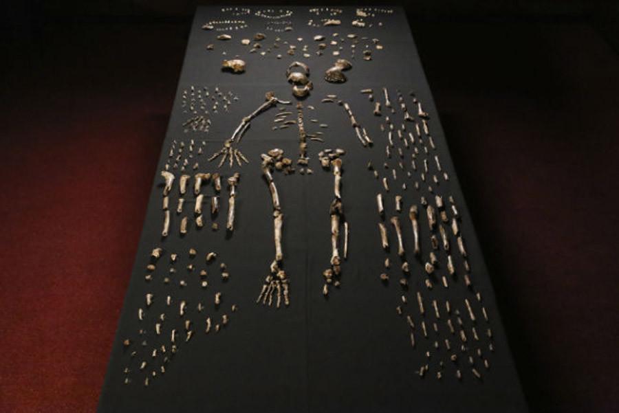 Homo naledi. © John Hawks / Wits University