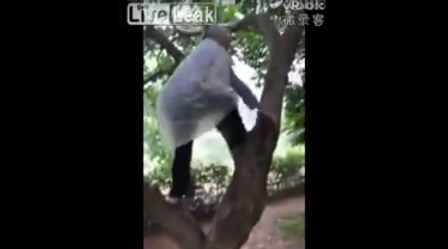 With a grace of a young girl: 97yo Chinese woman climbs tree to pick fruit (VIDEO)
