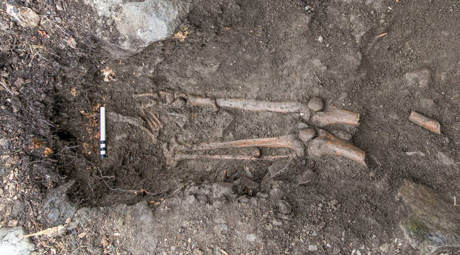 1,000yo skeleton of 'violent death' victim found after tree uprooted in Ireland