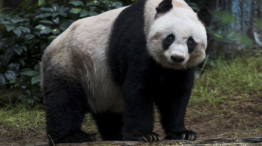 China's 'friendly envoy' panda makes US comeback in 3D