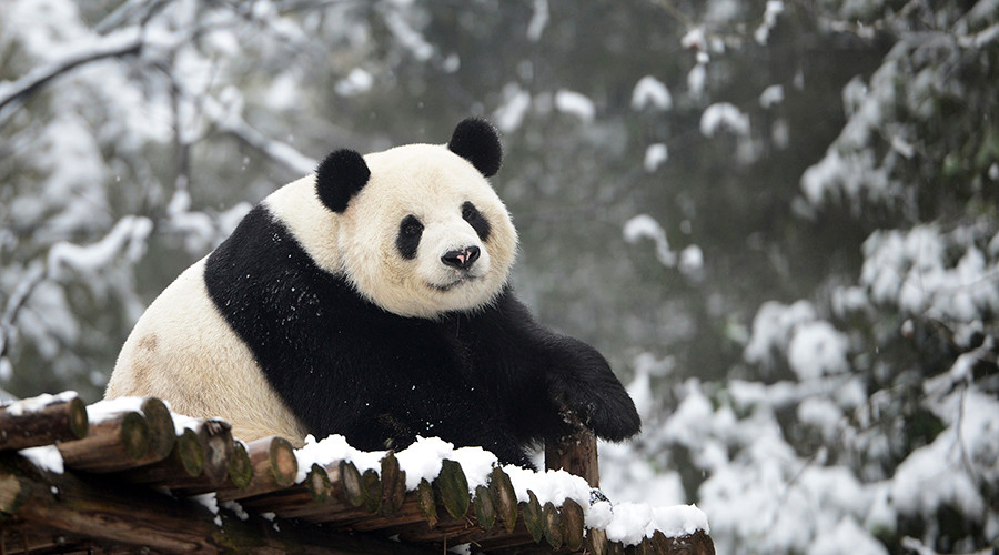 © China Daily