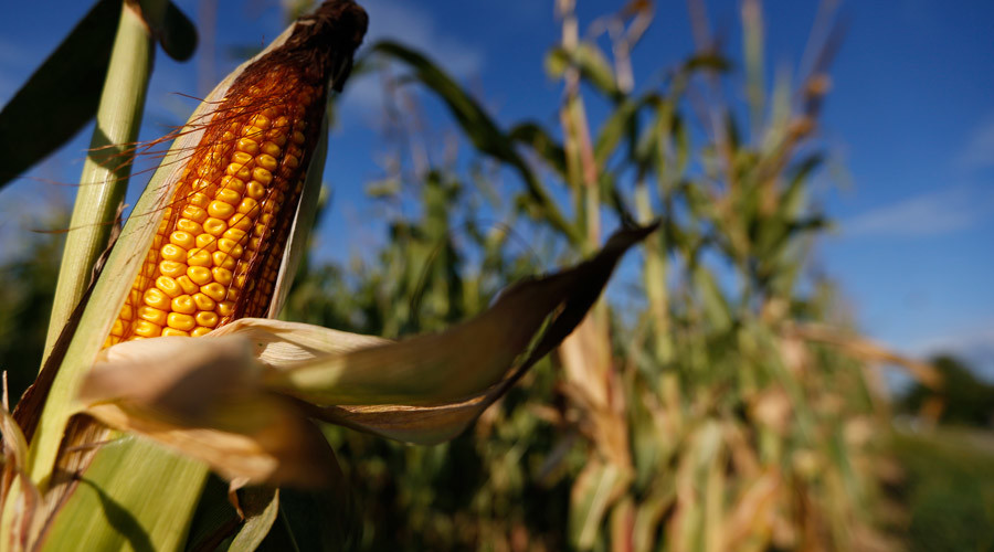 Two thirds of EU states reject GMO crops, file cultivation opt-out requests