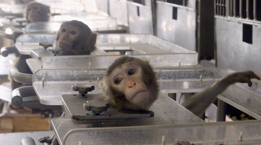 Law fails to prevent 'extremely cruel' testing on monkeys, campaigners claim
