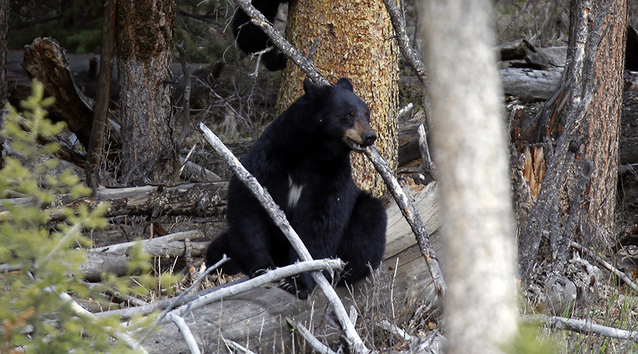 Central Florida re-freezes bear hunting after first day sees 99% of season's kill quota
