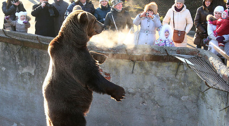 Government mulls measures to protect Russian zoo animals from public dissection abroad