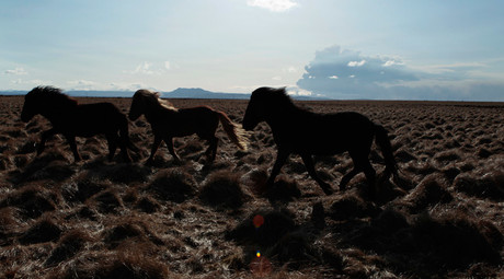 No charges filed after gov watchdog finds BLM illegally sold wild horses to slaughter