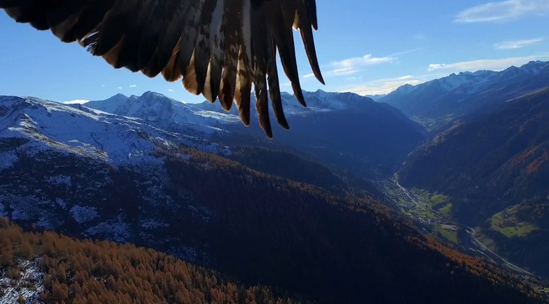 Hunter hunted: Eagle attacks drone filming in Austrian alps (VIDEO)