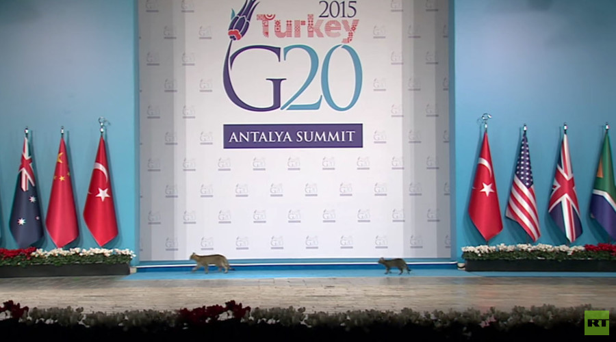 G20 catwalk: Trio of felines makes appearance at annual summit (VIDEO)