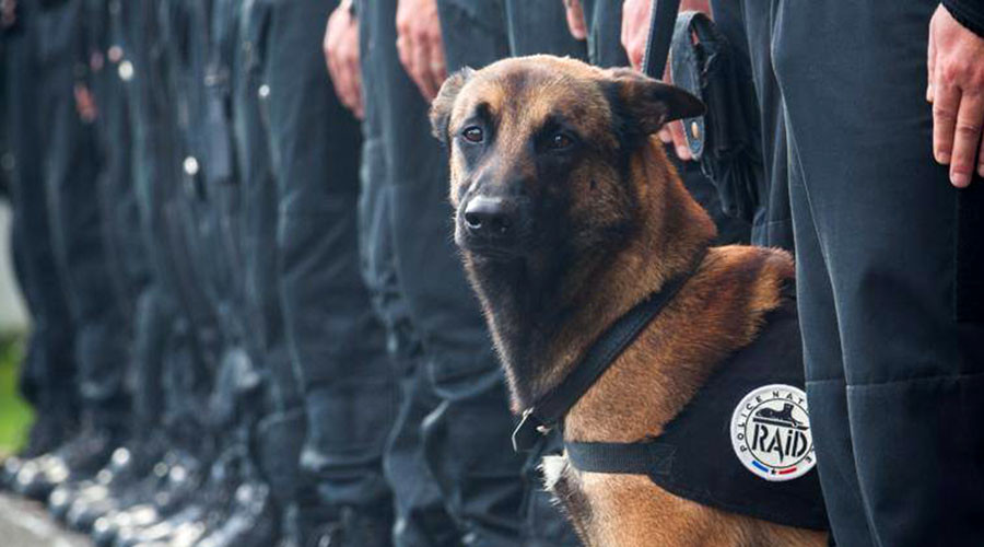 'Died for France': Mourning for police dog killed fighting terrorists in Saint-Denis