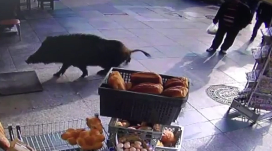 Porkish delight: Wild boar swims the Bosporus, terrorizes Istanbul locals (VIDEO)