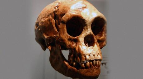 Homo floresiensis skull. © Wikipedia