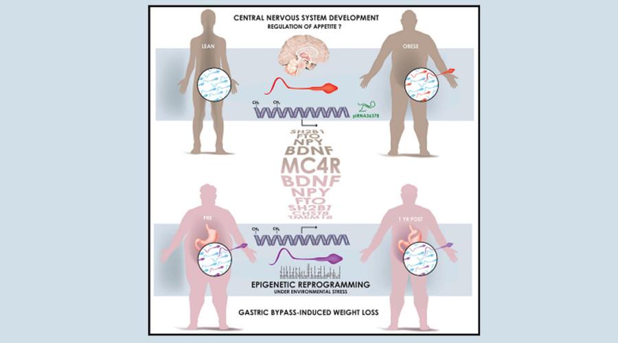 @ Cell metabolism.pdf
