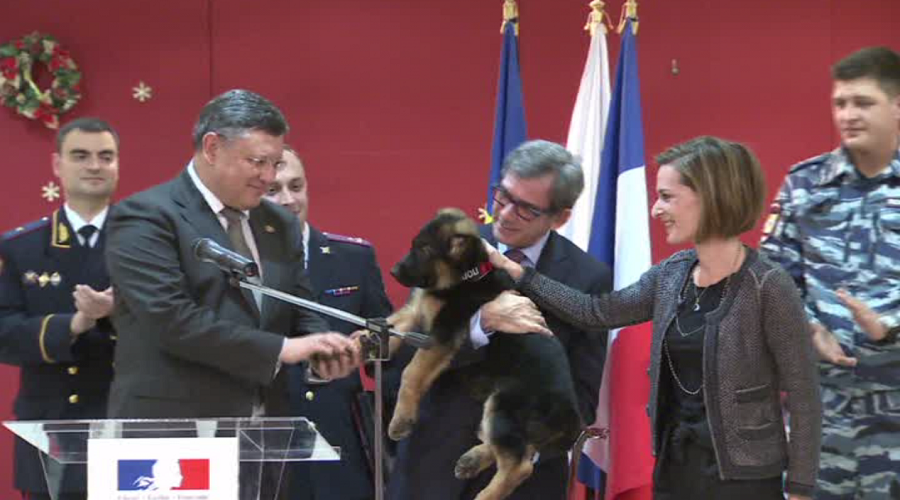 Russia's puppy heading to France to replace dog killed in anti-terror raid (VIDEO)