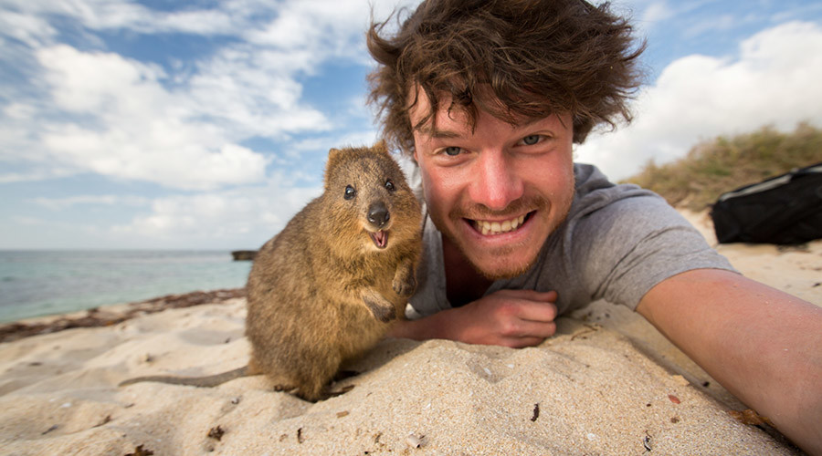 Quokkas are known for their photogenic smiles. © Allan Dixon