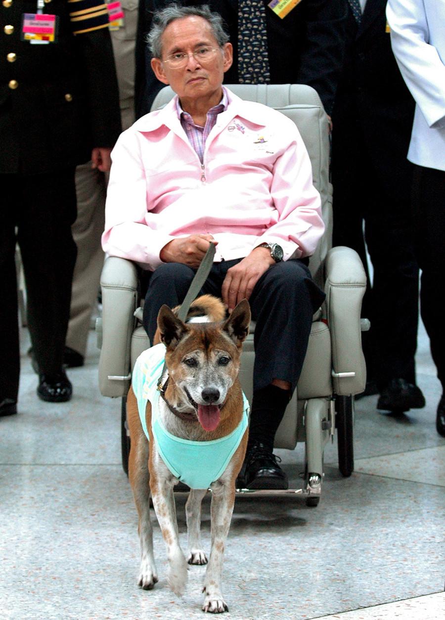 Thailand's King Bhumibol Adulyadej makes an appearance with his dog at Siriraj Hospital in Bangkok © Stringer