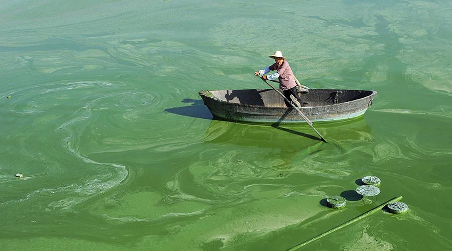 Cyanobacteria © Stringer