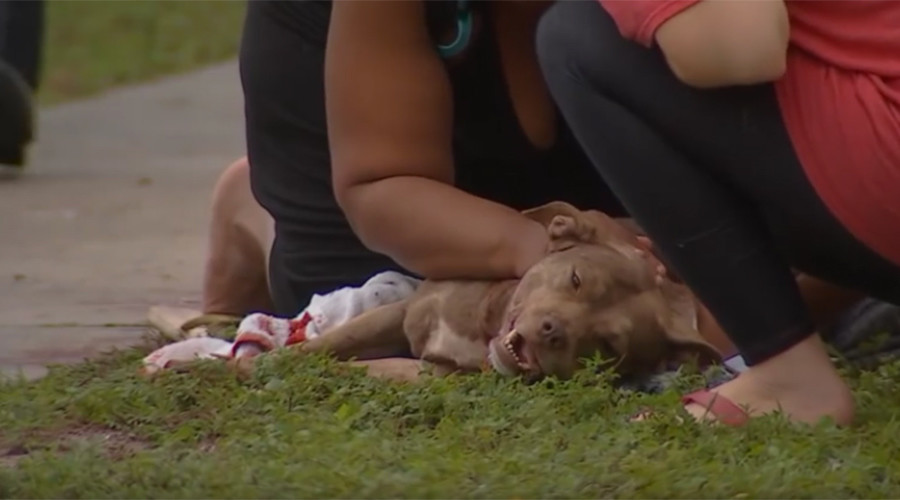 US pit bull dies protecting family from armed attacker