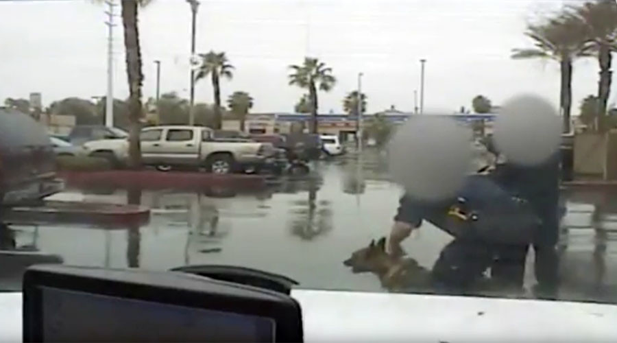 Dashcam video shows police injure infant with K-9, detain wrong man