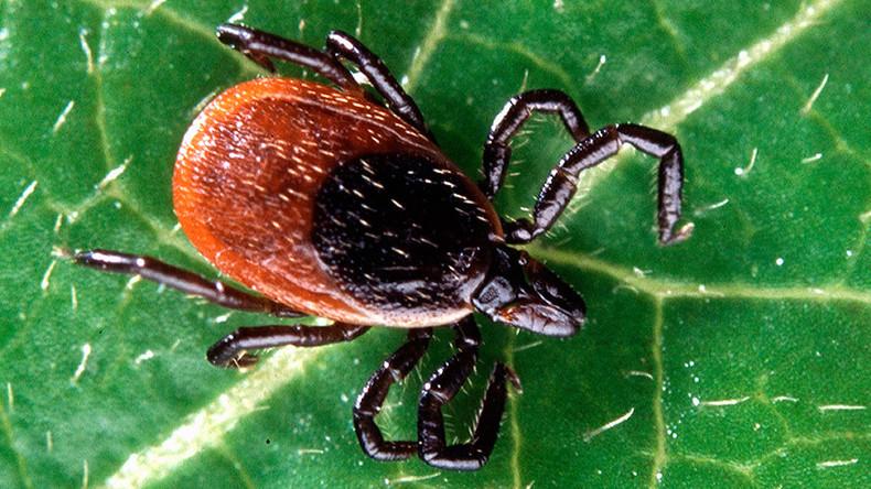 Lyme disease in humans - photo#54