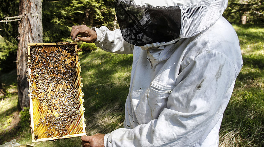 EPA admits popular insecticide threatens honeybees