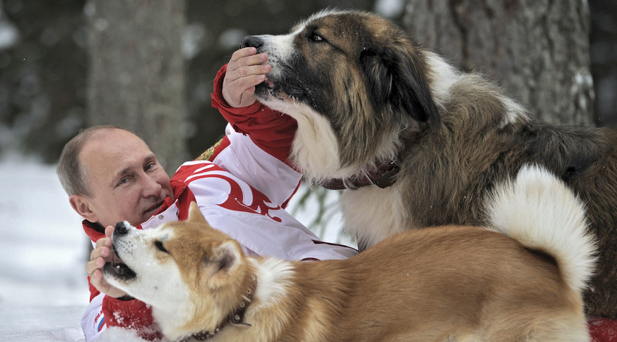 Russia's President Vladimir Putin lies on the snow during a walk with dogs in Moscow Region. © Alexsey Druginyn