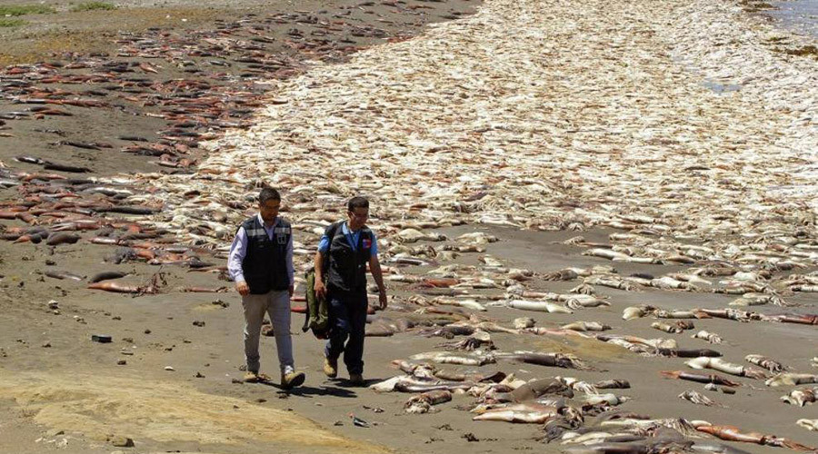 Cthulhu-geddon: Thousands of dead squid wash up on beach in Chile