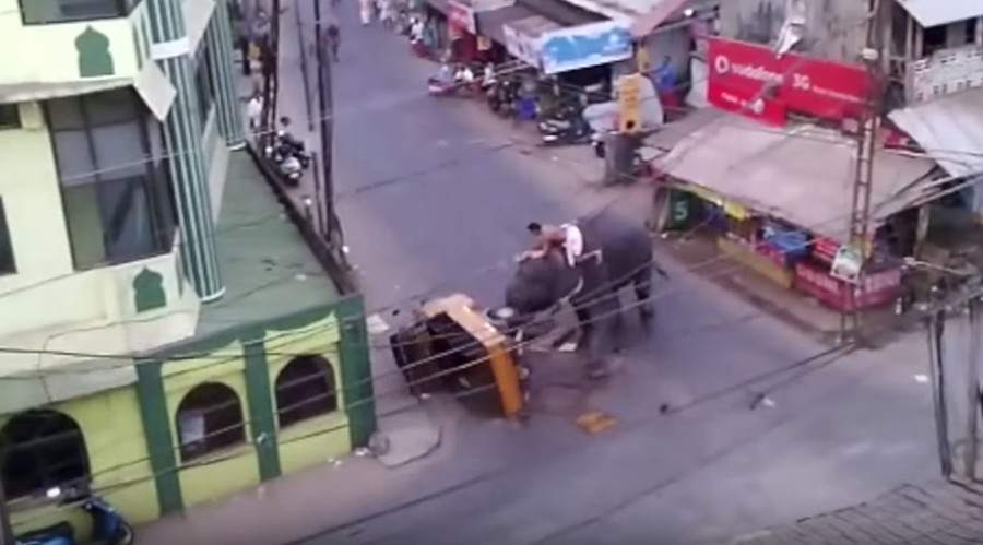 Elephant rage: Stressed 'Nelly' stomps Indian rickshaw (VIDEO)