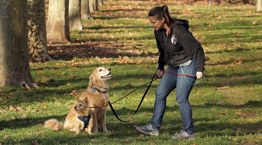 Doggie doo-doo DNA database to help Barking detectives find foulers