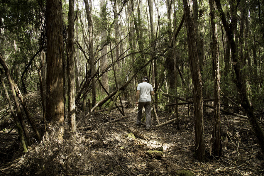 Logging of the Lapoinya forest could start in the coming days. © Stewart Hoyt