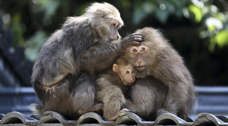 China develops autistic monkeys in hope of finding cure for disorder
