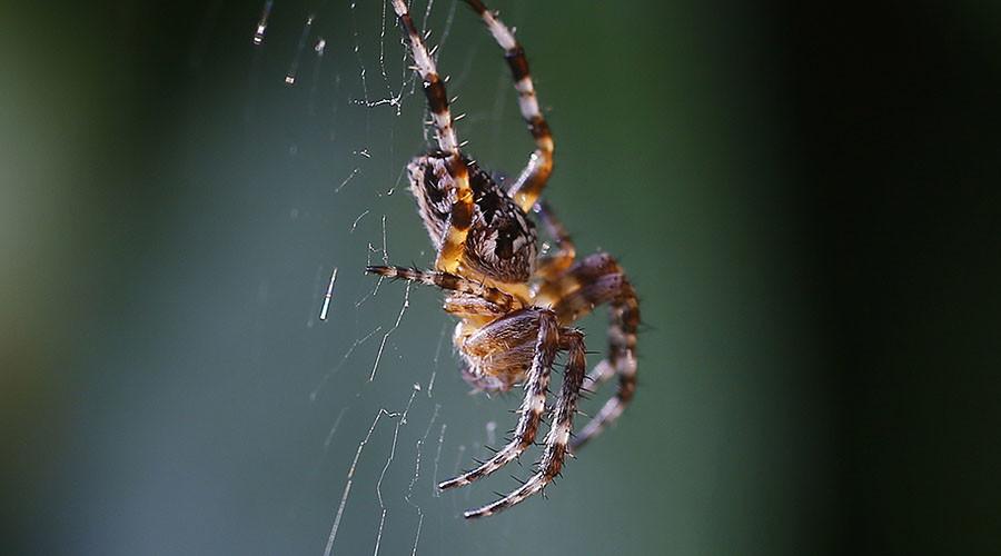 Arachnophobes beware: Scientists discover 'behemoth' spider