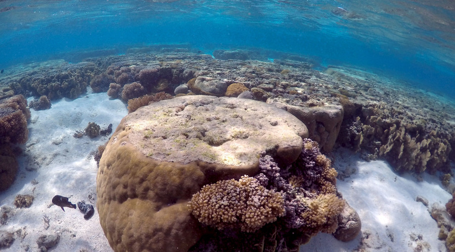 Luxury yacht of Microsoft's co-founder rips up 80% of endangered coral reef in Caribbean