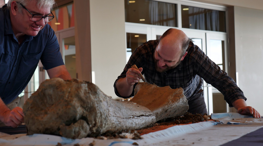 Surprise! Workers uncover 10,000-year-old mammoth bones at Oregon stadium (VIDEO)