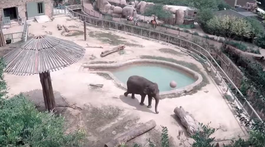 © San Antonio Zoo