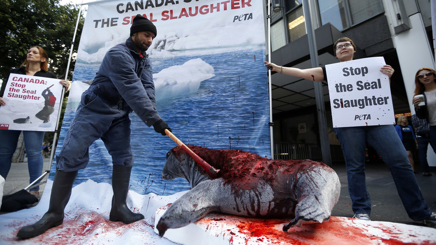 Sea Shepherd slams Greenpeace for seal harvest support