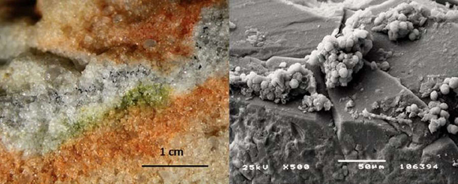 Section of rock colonized by cryptoendolithic microorganisms and the Cryomyces fungi in quartz crystals under an electron microscope. © S. Onofri et al.