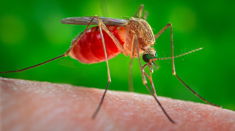 The virus is most commonly transmitted through mosquitoes. © James Gathany