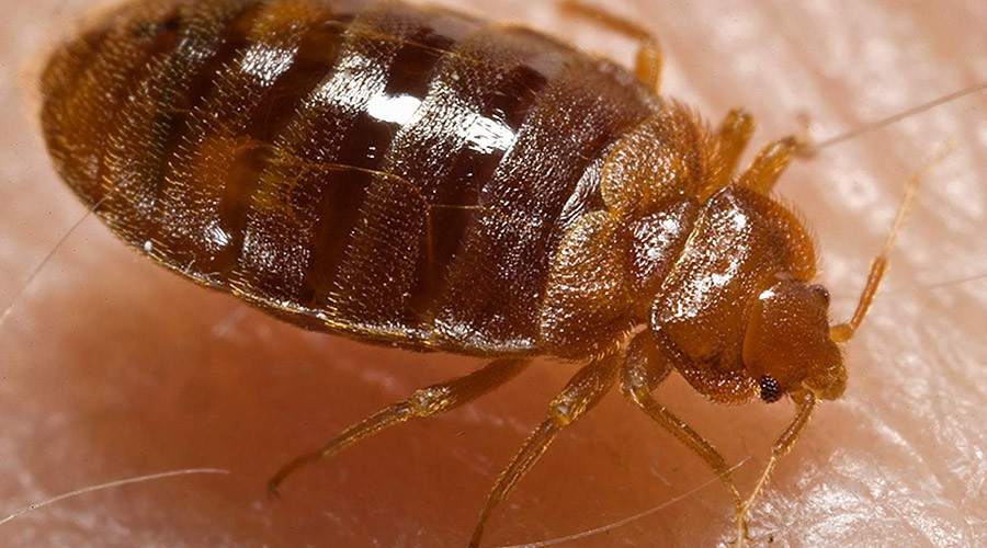 So long, bloodsuckers: Scientists crack bedbug genetics, plan its demise