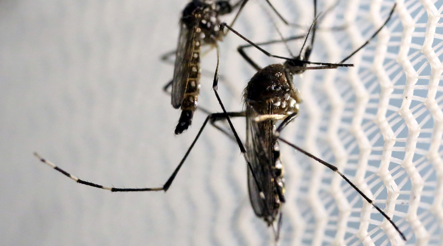 Cure? British scientists breed Zika-preventing mosquitoes