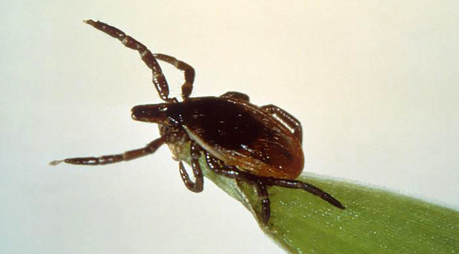 New Lyme disease bacteria discovered – US national health agency