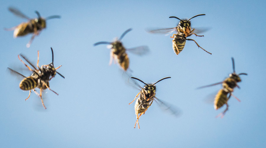 Flying lessons: Scientists show world through a wasp's eyes (VIDEO)
